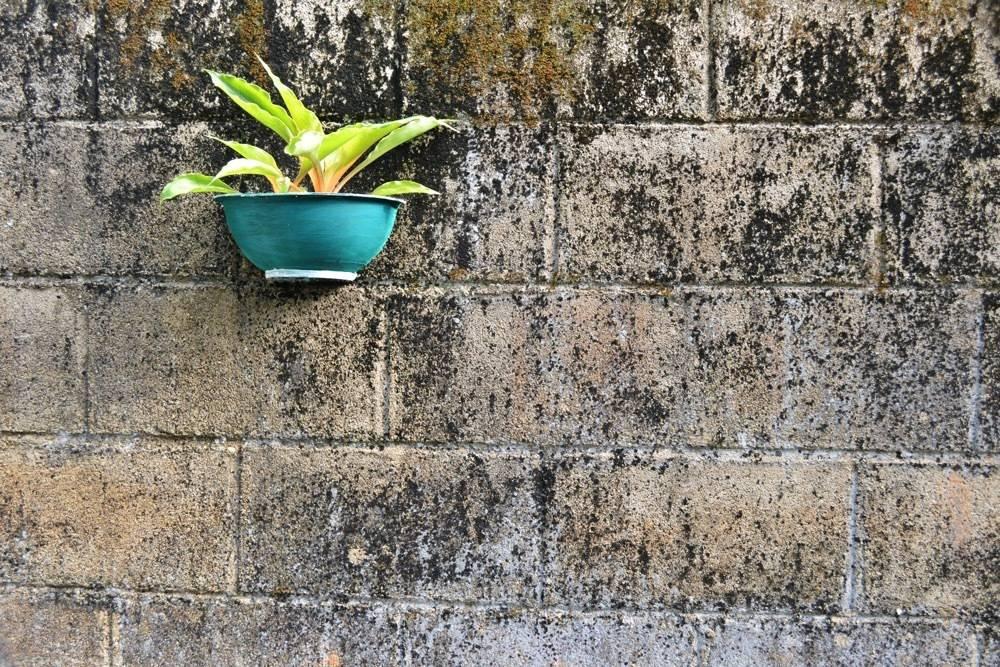 Decor Plant